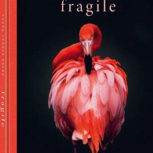 Fragile by Pedro Jarque Krebs