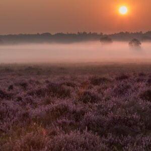 Heath at dawn