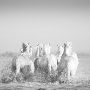 Getting there, Camargue by Marie-Claire Greve
